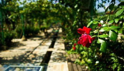 Dolina róż bułgaria