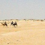 sahara turysci na wielbladach