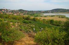 Wino z wulkanu albo… 7 miejsc, które musisz koniecznie zobaczyć, wybierając się nad Balaton