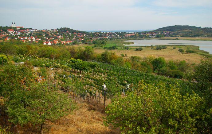 półwysep tihany winnice balaton