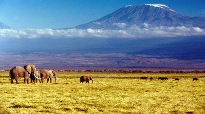 afryka kilimandżaro safari