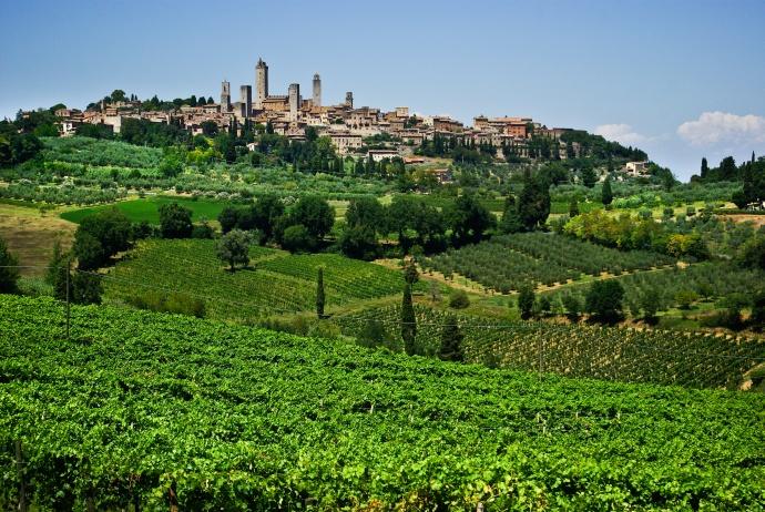 Toskania. Zabytkowe San Gimigmano a na pierwszym planie pola winnic i gajów oliwnych