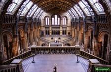 Nieważne jak fotografujesz, wszyscy się zachwycą. Muzeum Historii Naturalnej w Londynie [WIDEO]