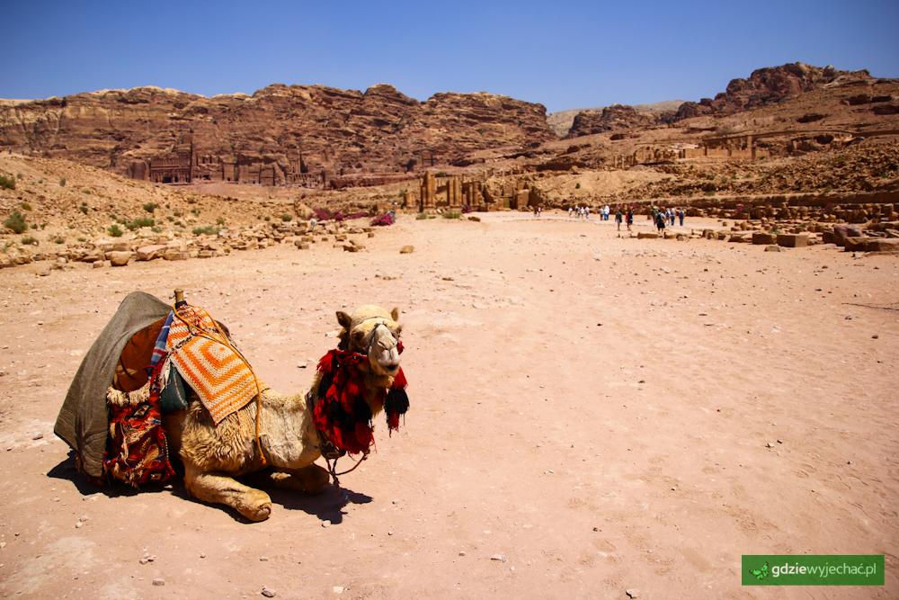 petra kamel