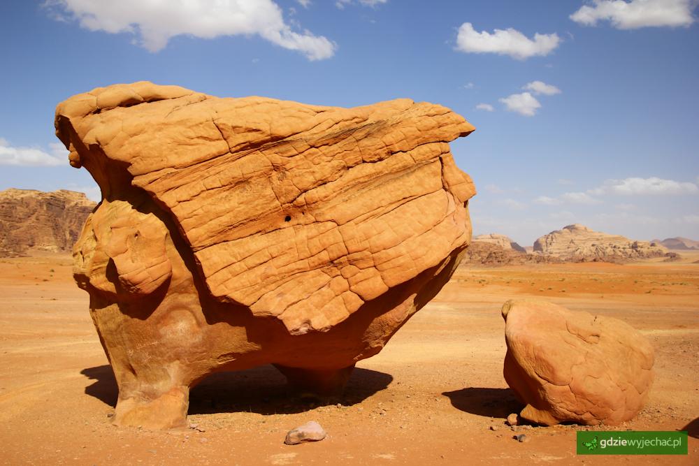 grzyb skalny wadi rum
