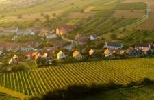 Wino + wzgórza + słońce, ale blisko. Wszystkie Toskanie Europy Środkowej