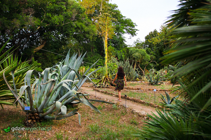 Ogród Botaniczny Palermo