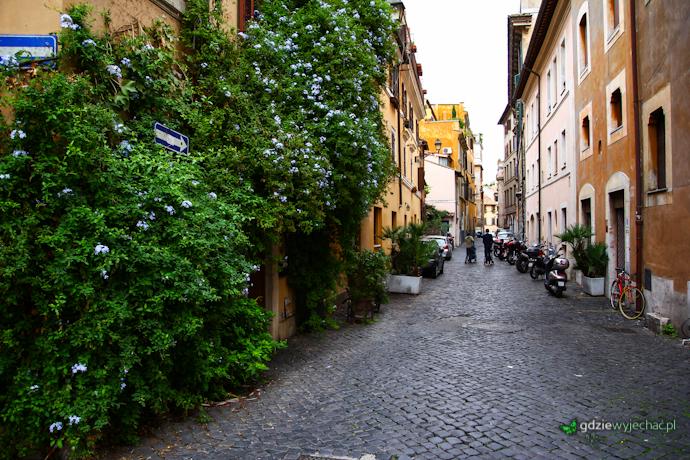 rzym zatybrze kwiaty