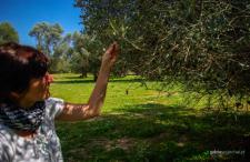 Rzymski gigant z Krety. Gortyna ukryta wśród oliwnych drzewek