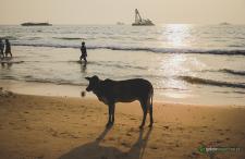 Ten pierwszy raz w Indiach. 10 zaskoczeń i ciekawostek tuż po powrocie