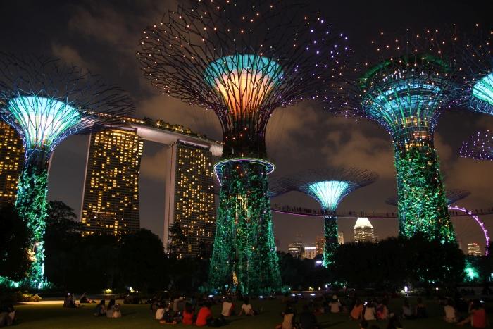 singapur kwiaty kielichy