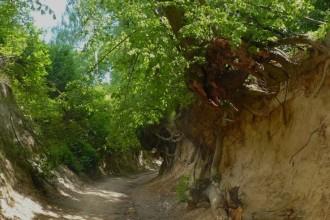 Wąwóz Korzeniowy - fot. Kraina Lessowych Wąwozów