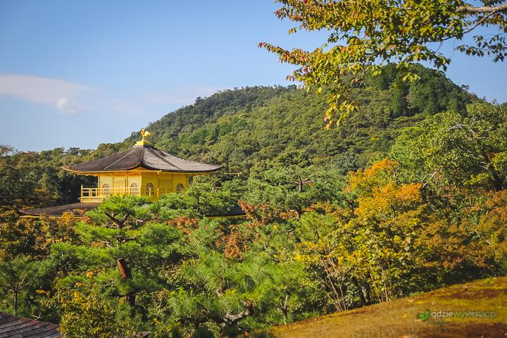 Kioto złoty pawilon jesienią