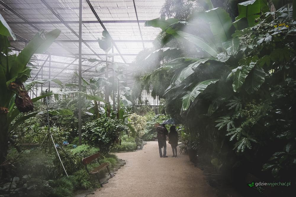 """Estufa Fria, takz wany """"ukryty ogród"""" pełęn roślinności atlancytkiej. Nas uchronił przed ulewą"""
