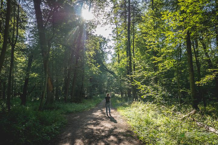 Białowieża las